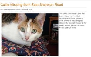 Bridgeport Connect's missing pet coverage of Callie